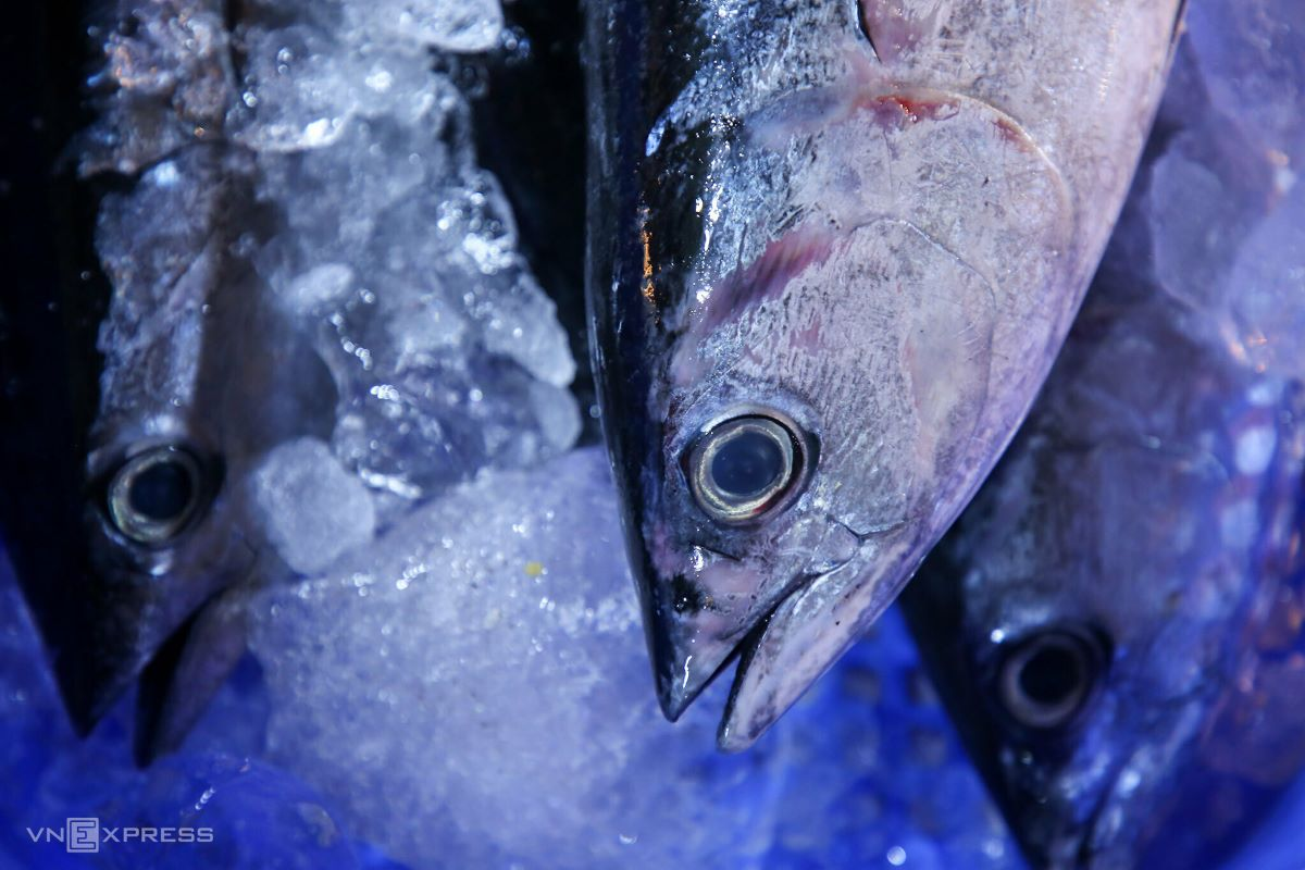 A fresh fish should have an overall shiny appearance with clear eyes.