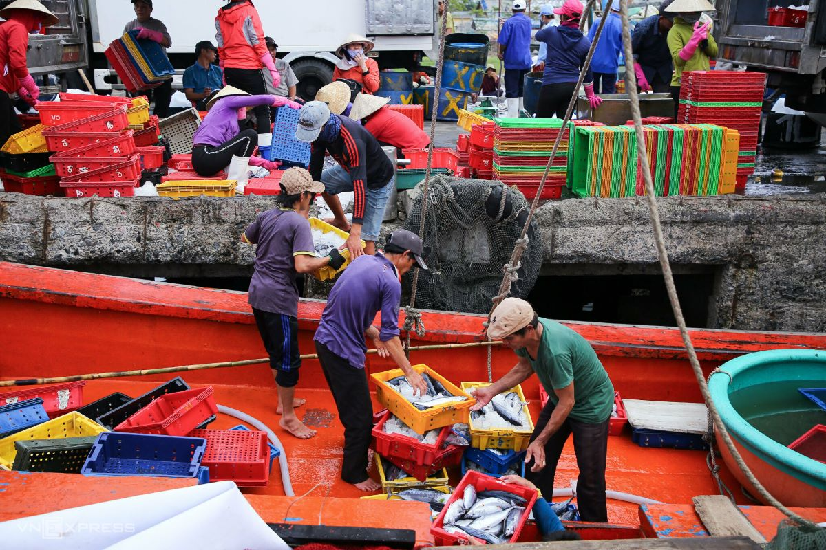 At around the same time in Son Tra District of Da Nang City, the market at fish port Tho Quang is no less busy. The day market starts at 12 p.m. and stops at 5 p.m.