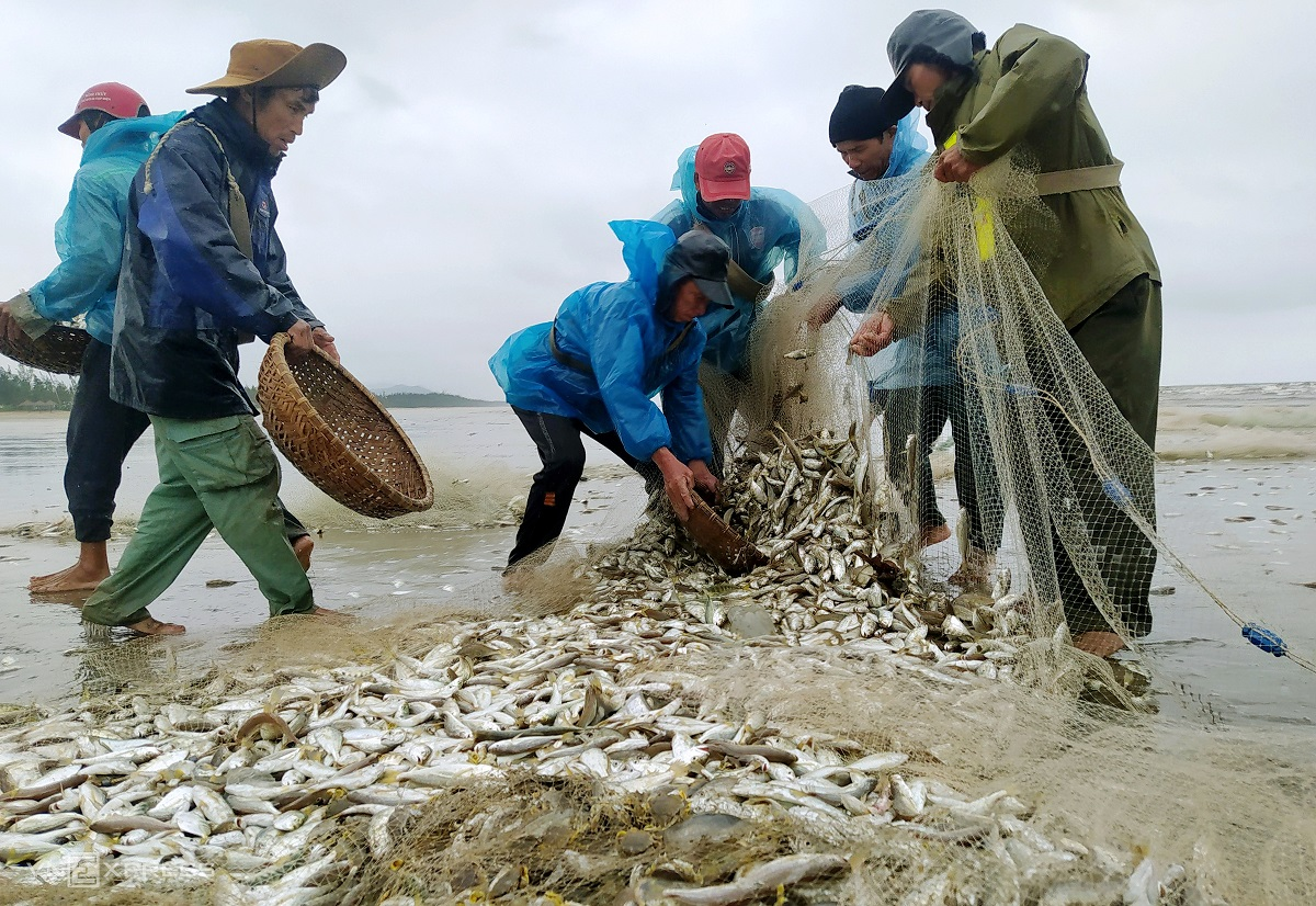 Croakers are collected in baskets. Fish sold on-site are priced at VND45,000 ($2) a kilogram. On a good day, we can catch 500 to 700 kilograms, though some days only 100 to 200, Nguyen Vong, 52, from Loc Ha District said.