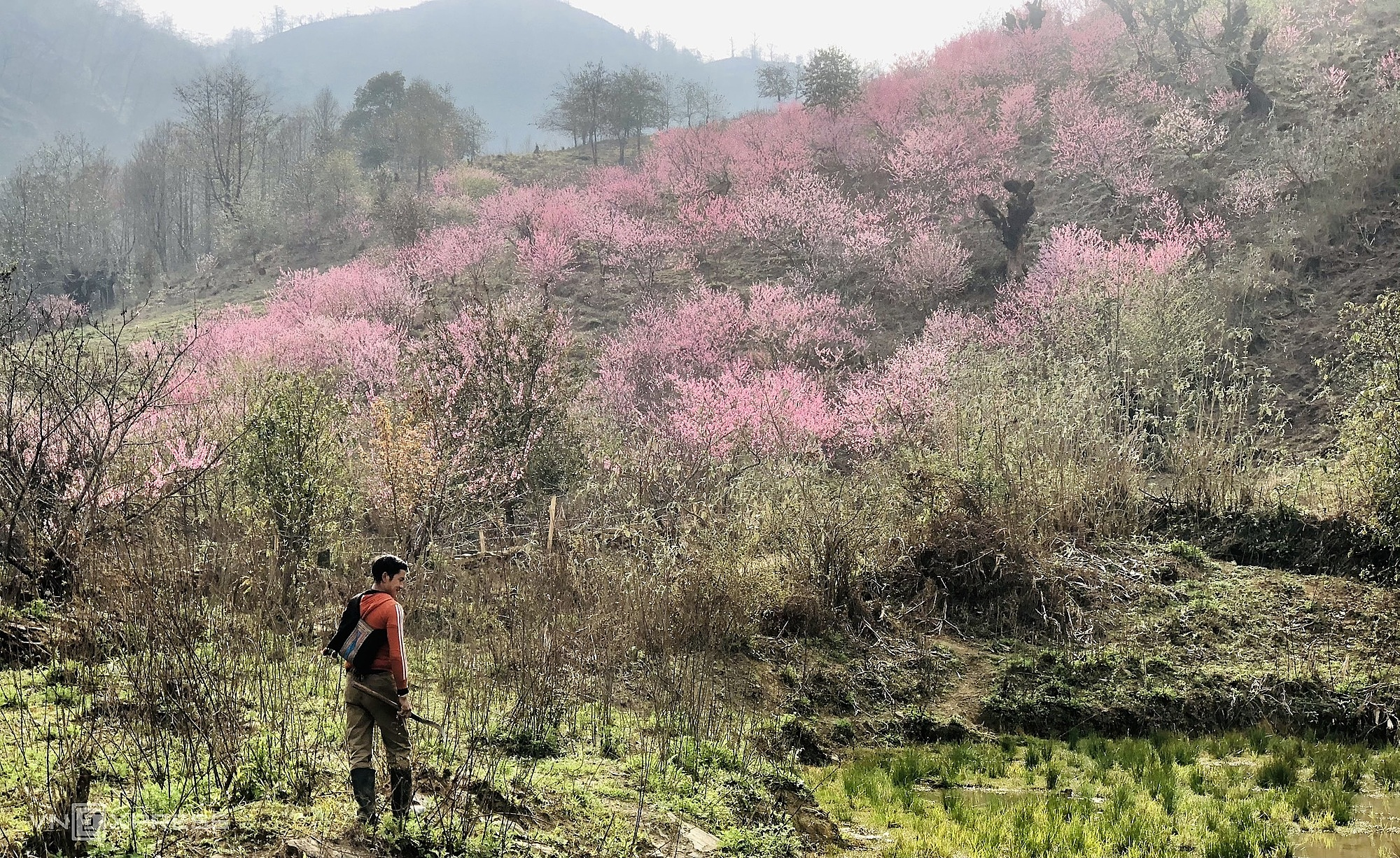 Peach blossoms adorn mountain foot village in Y Ty