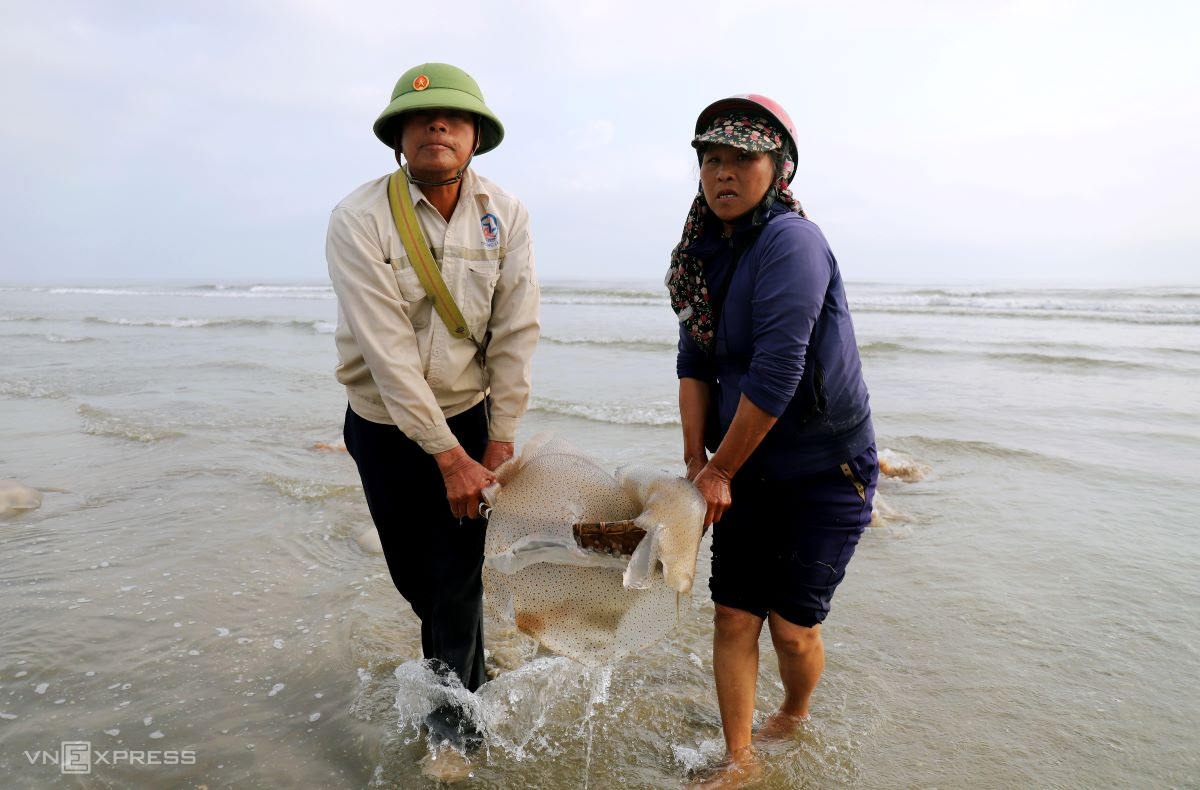 Some use baskets to scoop up floating jellyfish. A fresh and live jellyfish weighs from five to 50 kilograms, sometimes reaching 60 to 70 kilograms.  Nguyen Thanh Do, 55, described his typical day: I start work from 6:00 a.m., catch three batches and take a rest at noon. On average, we can catch 500 kilograms and if lucky, 700 kilograms. On stormy days, we might come back empty handed.