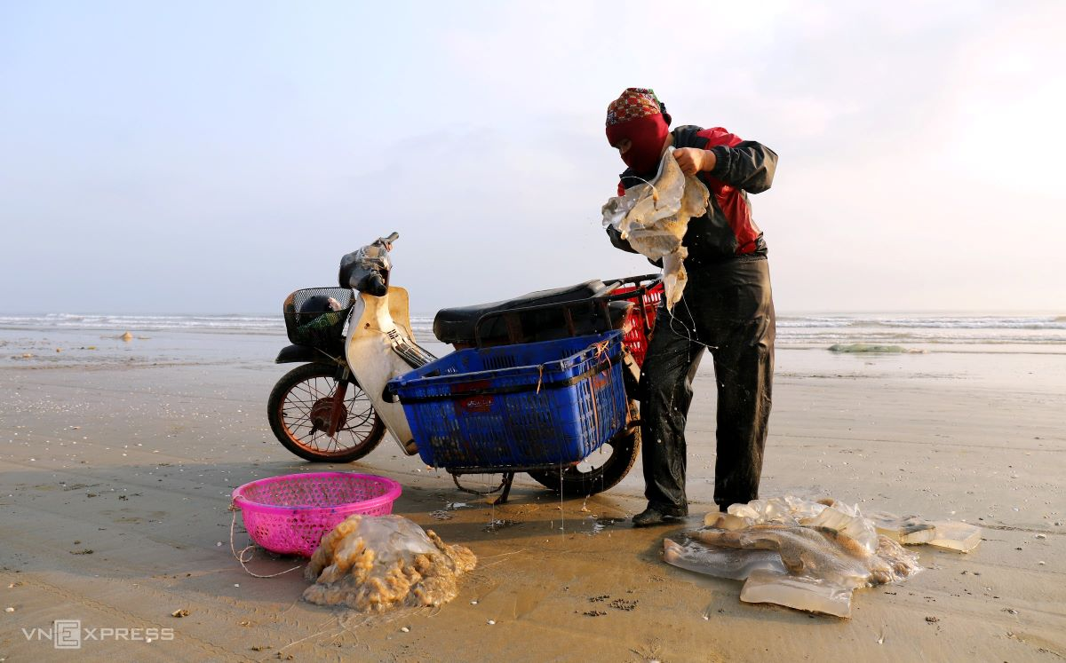 At 4:00 p.m., wholesalers and fishmongers gather to collect jellyfish. A 20 kilogram batch of freshly caught jellyfish is priced at around VND30,000 to 40,000 ($1.31-1.74).