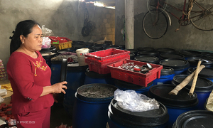 Formosa disaster stink lingers as tons of shrimp paste rot