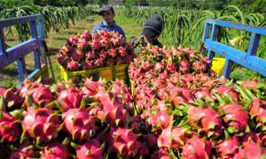 Vietnam targets $10 bln worth of fruit, vegetable exports