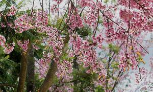 Vietnam designated a spring flower hotspot in Asia