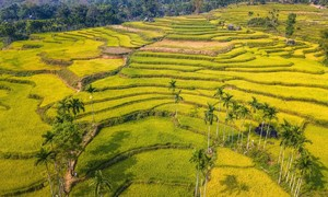 Picturesque rice terraces of Quang Ngai