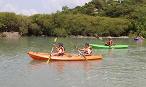 Mangrove forest kayaking in Khanh Hoa