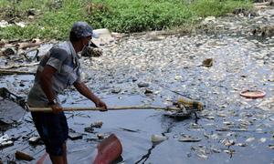 Fish die en masse in HCMC after heavy rains