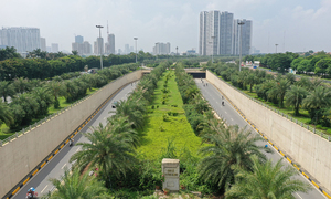 Hanoi preens itself over tree planting success