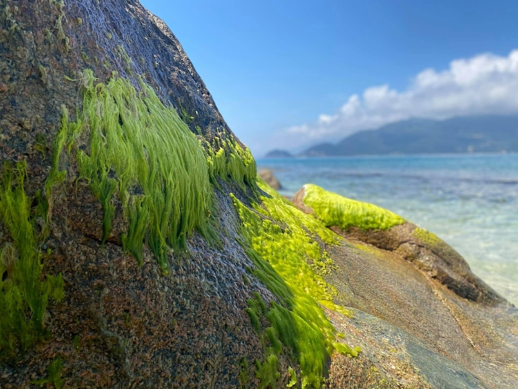 Hon Nua is uninhabited, so tourism services here are unavailable. It is suitable for short weekend trips. Therefore, visitors here are mainly backpackers or photography lovers who want to explore the island. The water in Hon Nua is so clear that you can see the moss under the water.