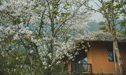 Avana Retreat, where nature, mind and body connect