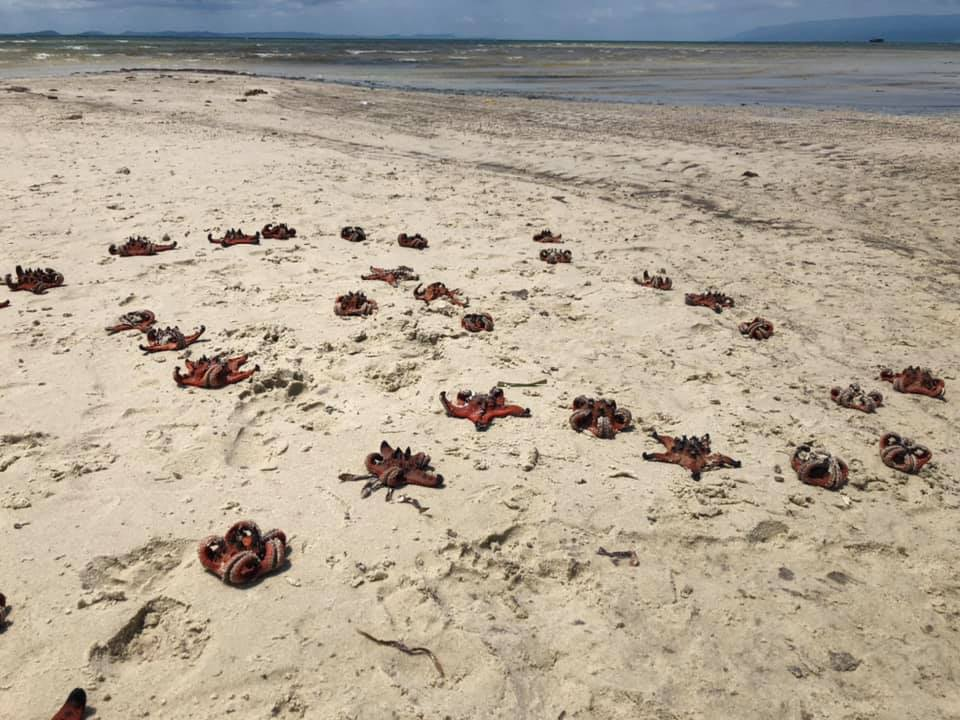 One of the photos of dead starfish that has made many people angry. Photo: NVCC