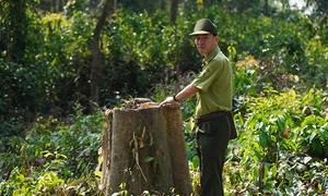 Gaur dies of old age in Vietnam nature reserve