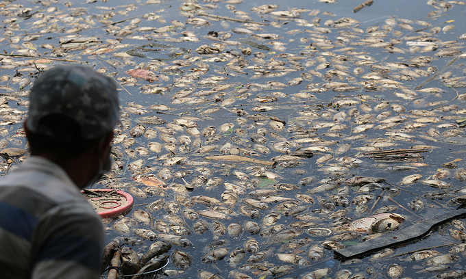 Wastewater washed into Saigon canal by rains kills fish en masse