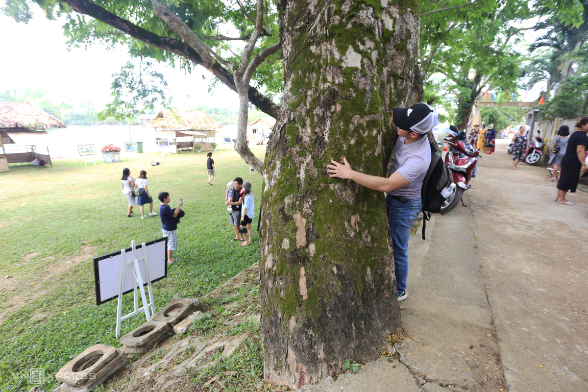 Legume trees allure visitors to central Vietnam village