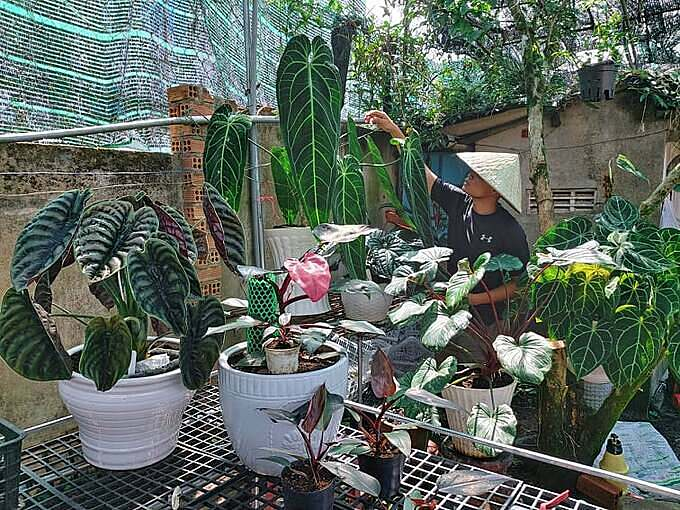 Quy takes care of his houseplants which he has been collecting for four years. Photo courtesy of Quy.