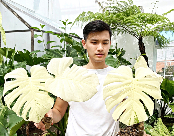 Dinh Han holds his Monstera Deliciosa White Monster. Photo courtesy of Han.