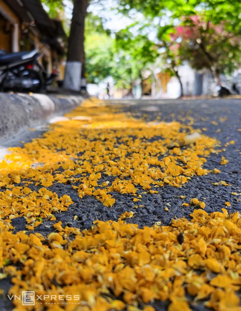 Hoi An flowers extend a summer greeting