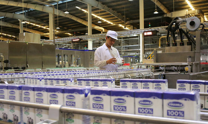 Dairy giant to remain cautious until herd immunity