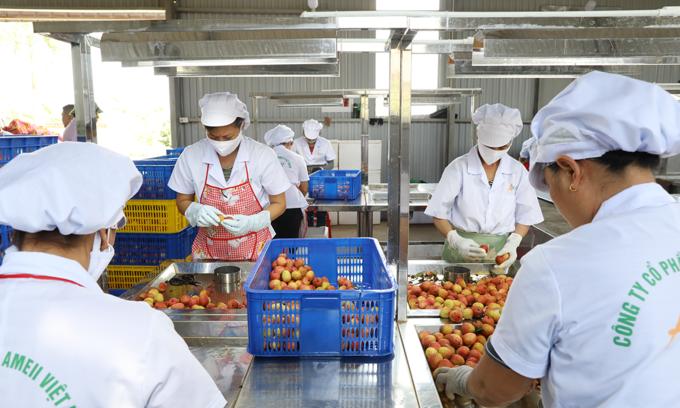 Doors open wider for Vietnam exports to the US