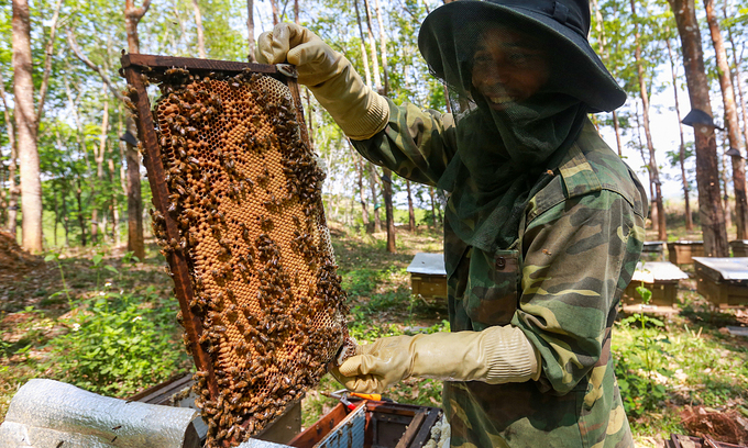 Honey exports set for anti-dumping probe in US