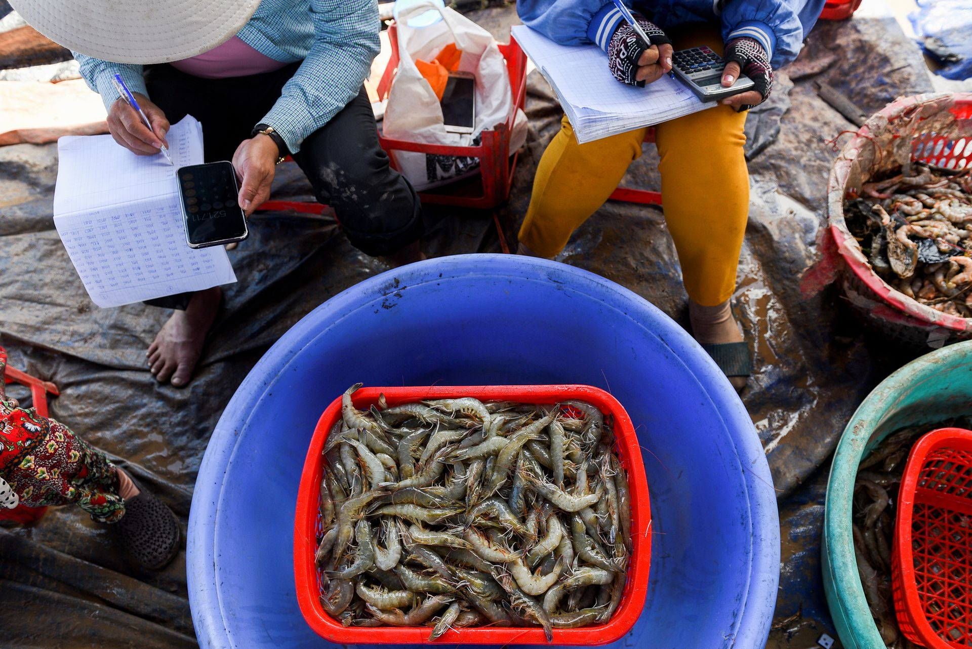 Shrimp farmers weigh harvested shrimps in Soc Trang Province, Vietnam, April 27, 2021. Photo by Reuters/Thanh Hue.