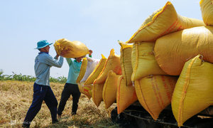 Rice exports cross $1 bln on higher prices