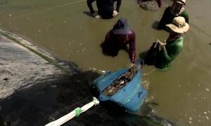 Vietnamese farmers leverage climate change to boost shrimp