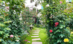 Businesswoman cultivates rose garden of nearly 500 species