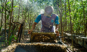US launches anti-dumping investigation on raw honey