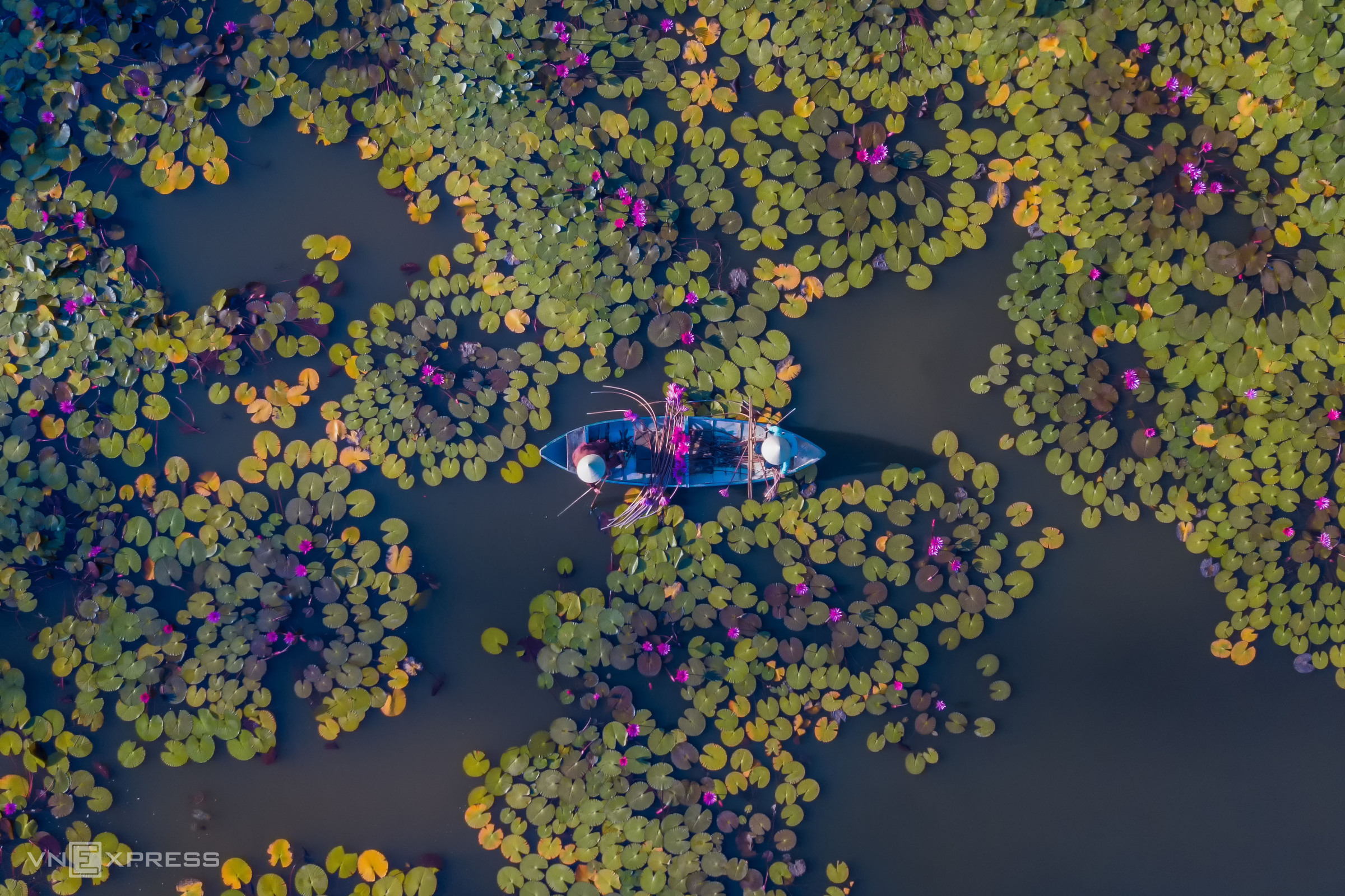 Water lilies pond: a serene getaway in Quang Ngai Province