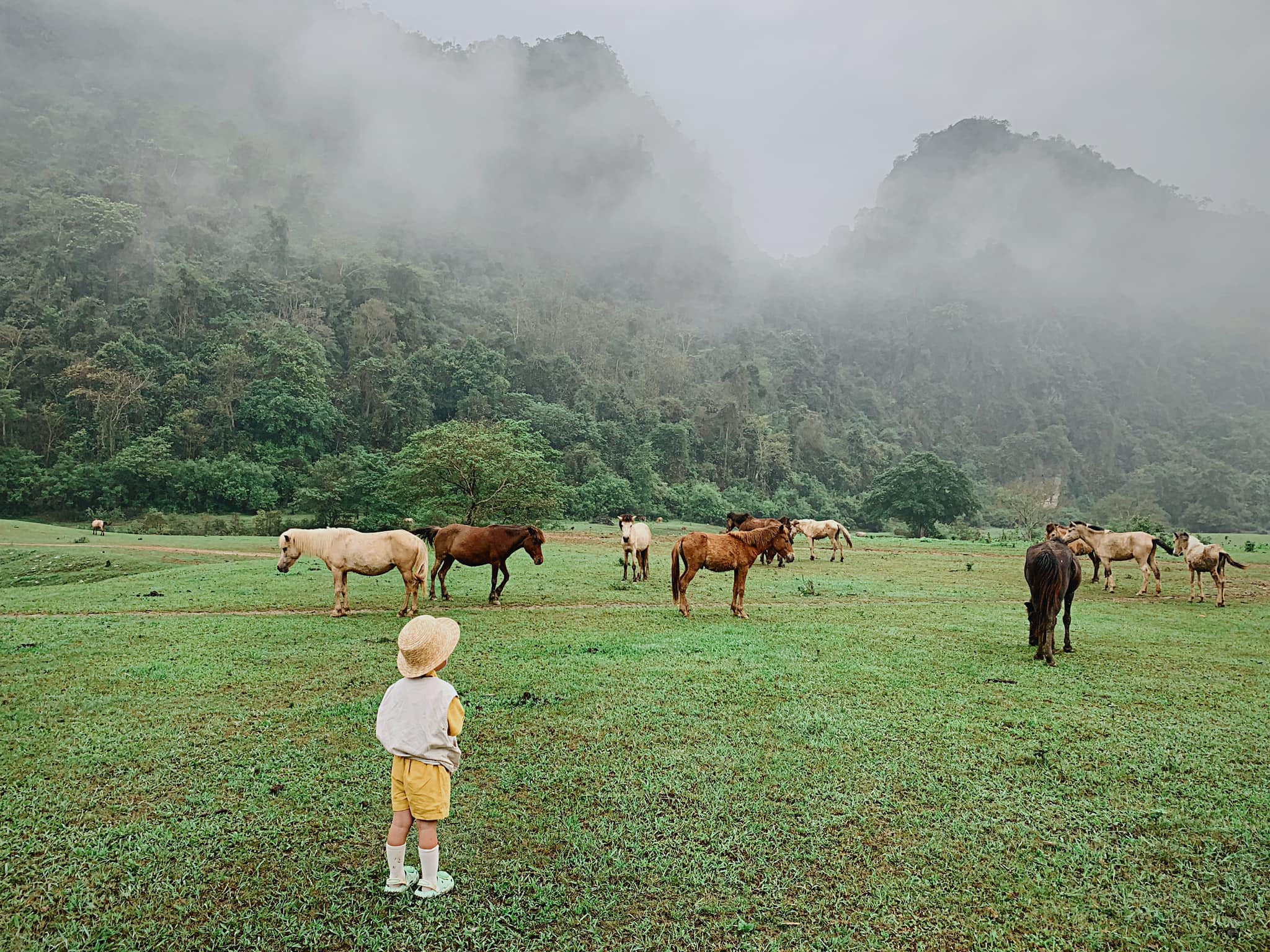 Nhungs son watches a herd of horses grazing on a grassland at Dong Lam steppe in Lang Son Province during his familys camping trip, May 2021. Photo courtesy of Nhung.