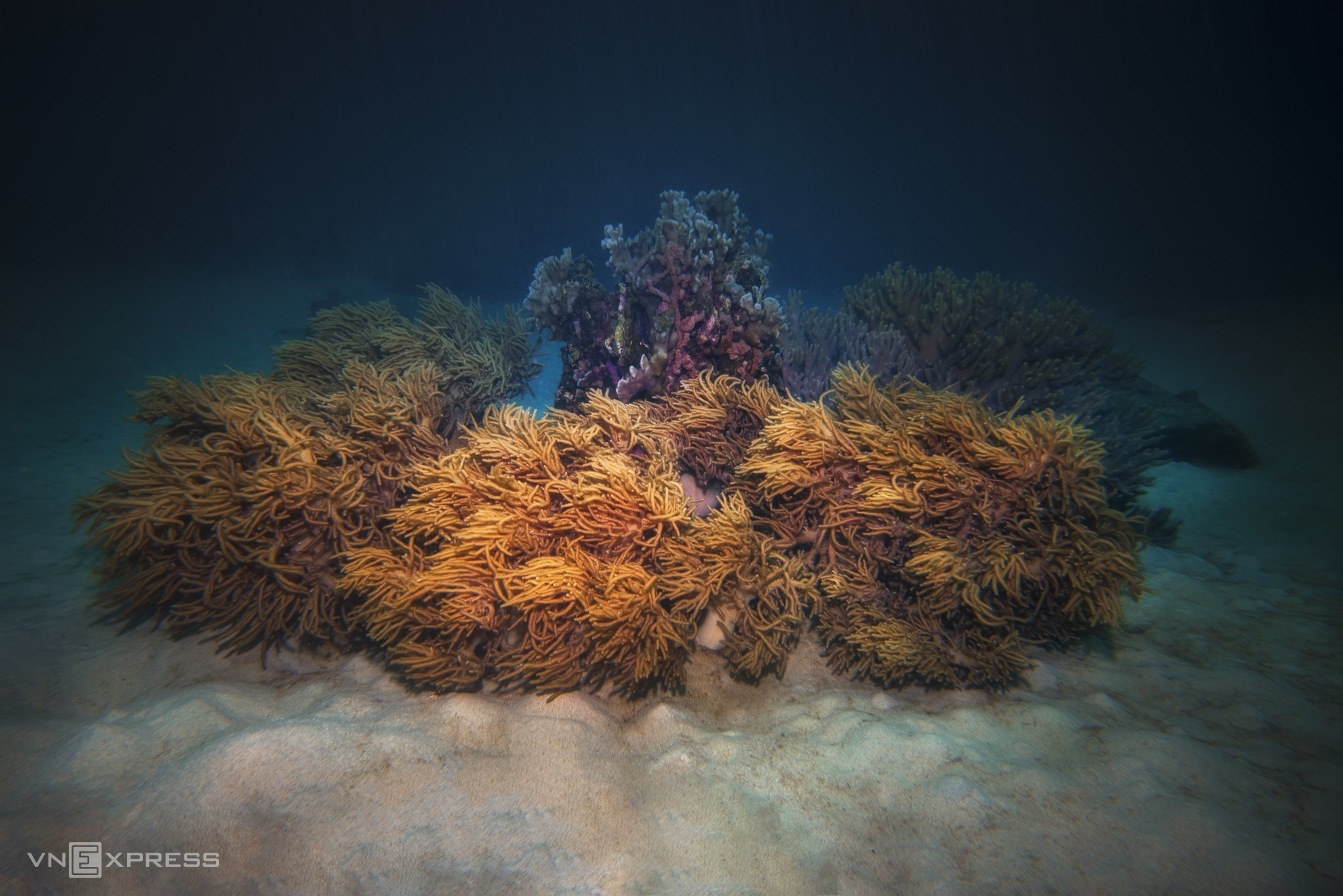 Diving tour explores protected Nha Trang seabed