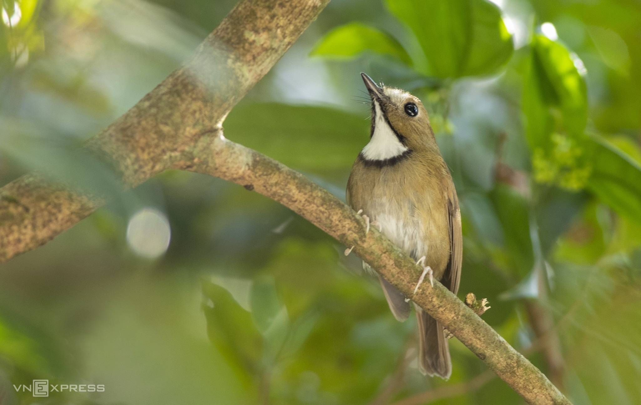 Kingdom of birds rules over Bach Ma mountain peak