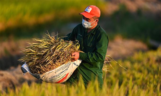 Vietnam rates fall as buyers hunt cheaper deals