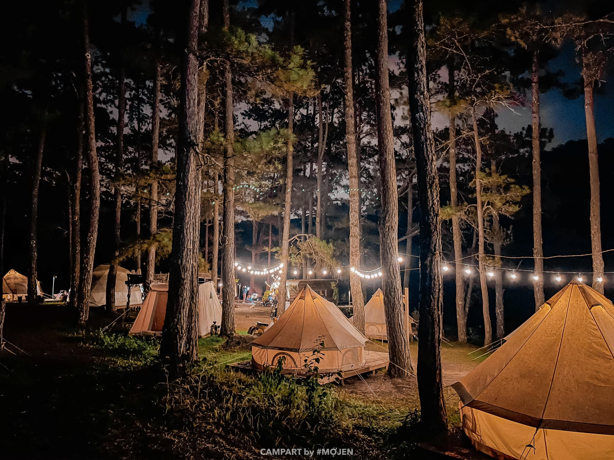 Tents are surrounded inside the pine forest in the Golden Valley in Da Lat. Photo courtesy of CampArt.