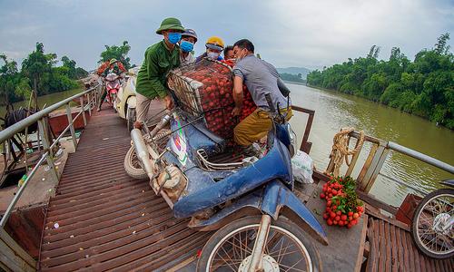 Pontoon bridge a nightmare for farmers in Vietnam's lychee hub