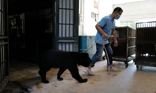 Sanctuary receives last bears from Hanoi circus