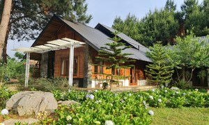 Beat the sizzling heat at northern highland Moc Chau escapes