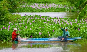 A glimpse into Hau Giang's countryside