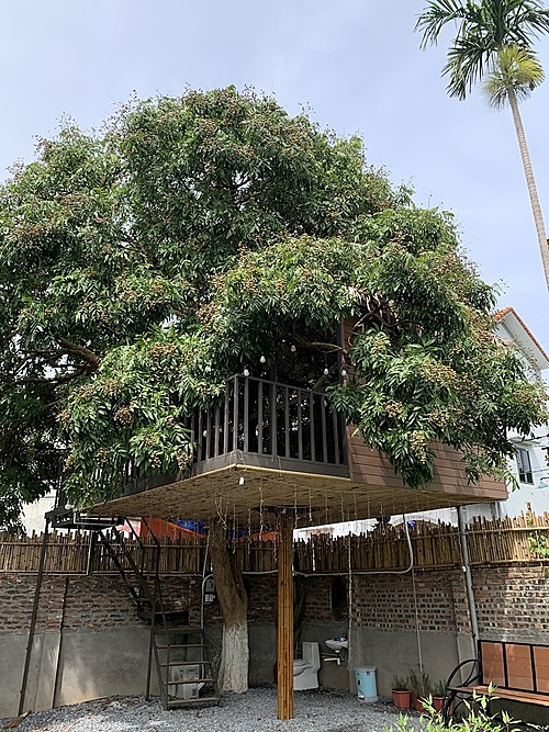 The 22-square-meter treehouse hangs 2.8 meters above ground.   Construction took about 20 days with the help of three workers. While building the house, Tu had to make adjustments to the original design. For instance, the leading staircase was initially positioned around the main pillar, but later placed to the side of the house.