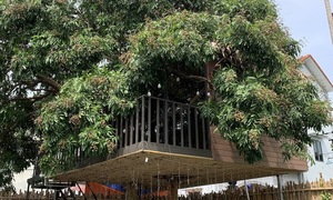 Hanoian builds man cave in treehouse