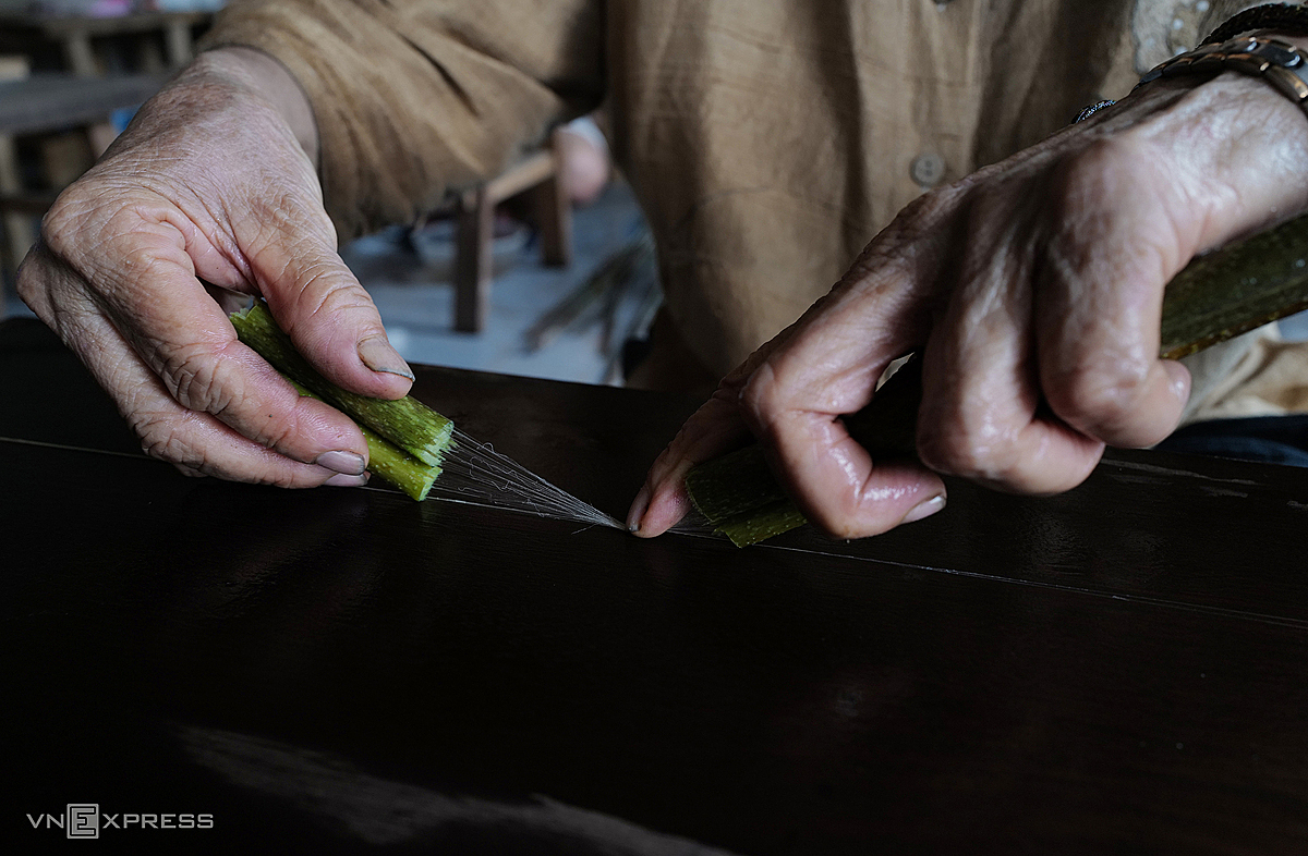 Thuan uses a knife to cut around the lotus stem, and twists and pulls the fibers with her hands.   Each lotus stem can produce one meter of fiber. Skilled workers can work on 200 stems a day.  To train someone to draw lotus silk takes one month, because the use of the knife requires precision. If the cut into the stem is too deep, the fibers will break and become too short.