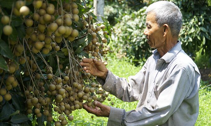 Mekong Delta fruit overabundant amid HCMC wholesale market closures