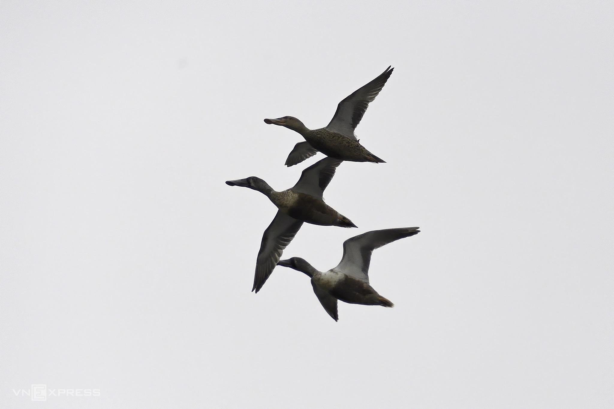 Stalk rare birds inside Van Long nature reserve