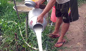 Farmers 'cry' over spilled milk in southern Vietnam