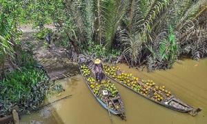 A glimpse into Vietnam's coconut kingdom