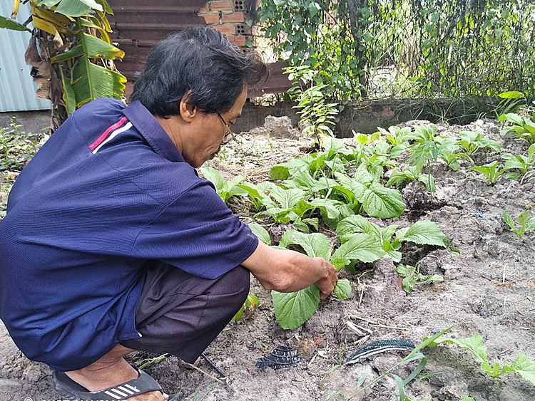 Truong Van Phi plans some vegetables at the wasteland near his house to incorporate them into his meal. Photo courtesy of Phi.
