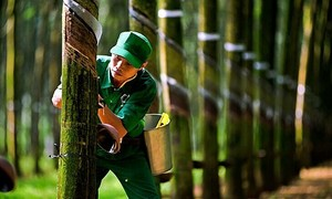 Rubber firms bounce back from poor 2020 as demand, prices surge
