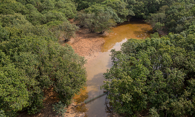Central Vietnam mangrove restoration project wins 2021 Risk Award